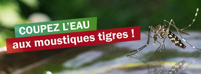 L'attribut alt de cette image est vide, son nom de fichier est moustiques-tigres.jpg.